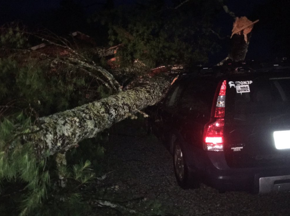 Down trees destroyed buildings at Camp Brookline in Bridgton (WGME)