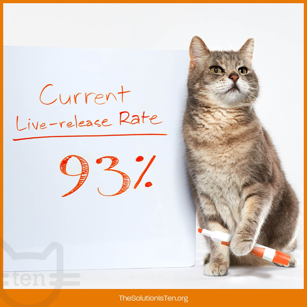 <p>The no-kill rate at the end of 2018 was at 93% in local animal shelters, which is the first time the average annual rate was over 90%. Scooter's campaign is believed to have affected these positive results. / Image courtesy of The Ten Movement // Published: 2.17.19</p>