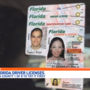 New Florida driver's license to boost security