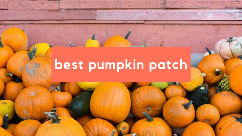best pumpkin patch.png