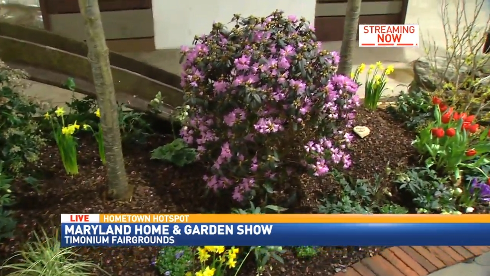 Superbe Maryland Home And Garden Show | WBFF