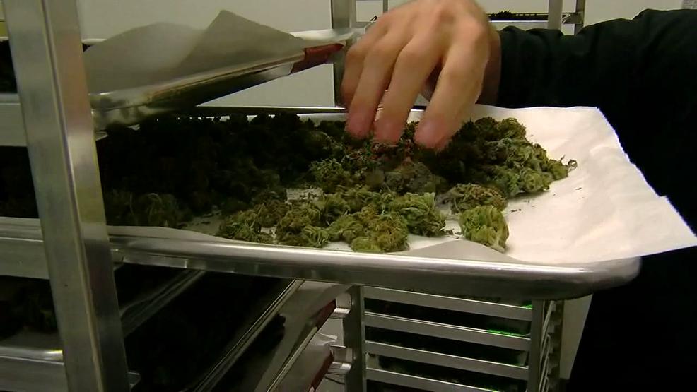 University offers medical marijuana grad programs | WKRC