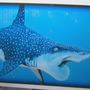 Discovery Center gears up for 'Sharks After Dark'