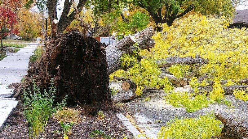 Strong winds rage through SLC. (Photo: Brian Morris)