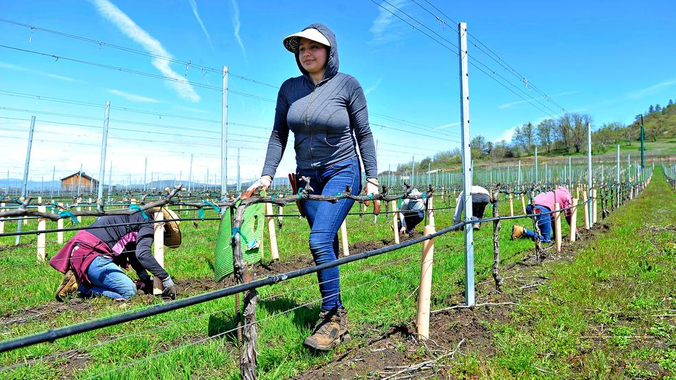 Southern Oregon wineries fear Senate bill will crush them