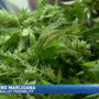 Recreational marijuana could end up on November ballot after hearing today