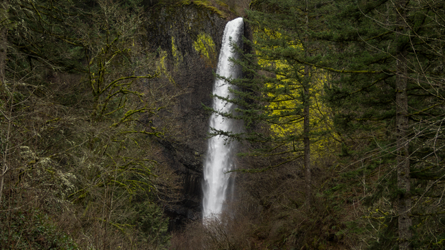Family of man crushed by tree in Columbia River Gorge sues Oregon