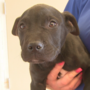 Amarillo puppy recovers after being rescued from dump trucks