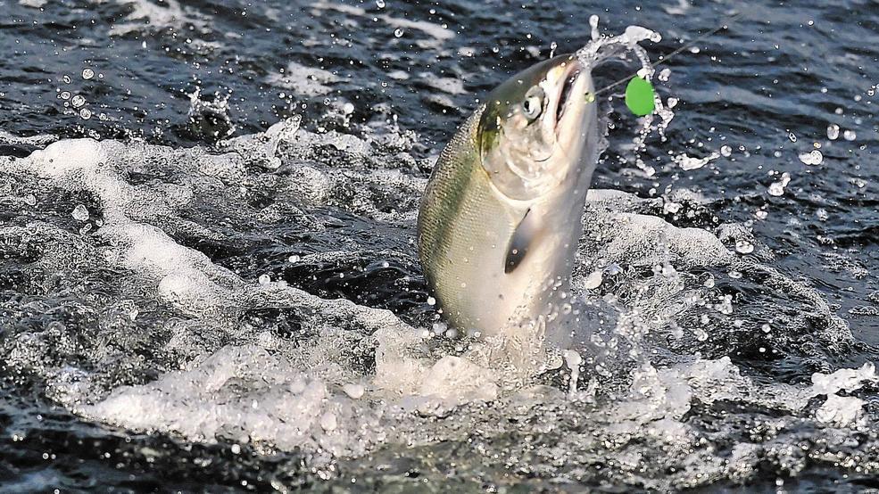 Southern Oregon ocean chinook salmon fishing season is solid