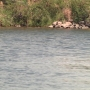 DNR releases new details about fatal Lake Murray boat crash