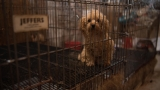 Nearly 130 animals rescued from suspected NC puppy mill