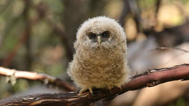 Oregon receives grant for endangered species study