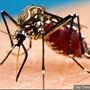 Mosquitoes test positive for La Crosse, West Nile viruses in Kanawha, Putnam