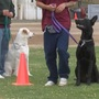 PAWS Program: Inmates train dogs from LC Animal Shelter