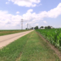 Tall corn creating blind spots for drivers