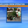 Marijuana growing operation busted