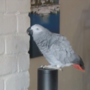 A foul-mouthed parrot uses Amazon's Alexa to order things when his owner is away