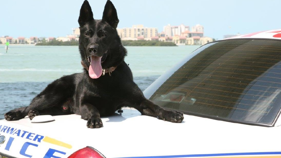 Clearwater police officer writes touching goodbye letter to K9
