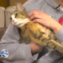 Meet Strudel, a friendly cat who needs a home!