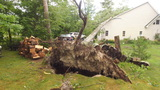 PHOTOS: Storm damage following EF-0 tornado in Antrim County