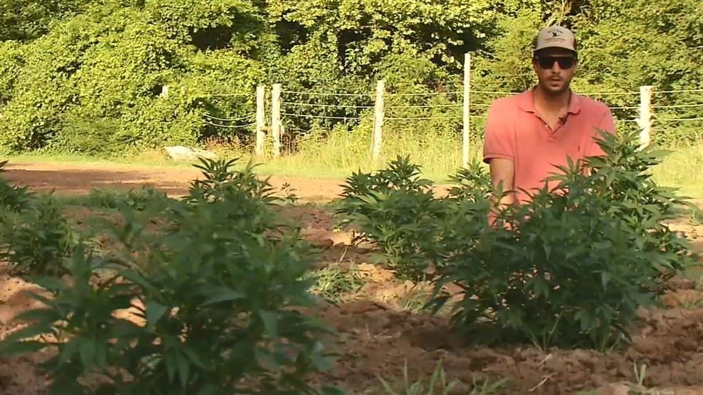 Backyard Cash Crops tn hemp farming: a growing industry offering another cash crop