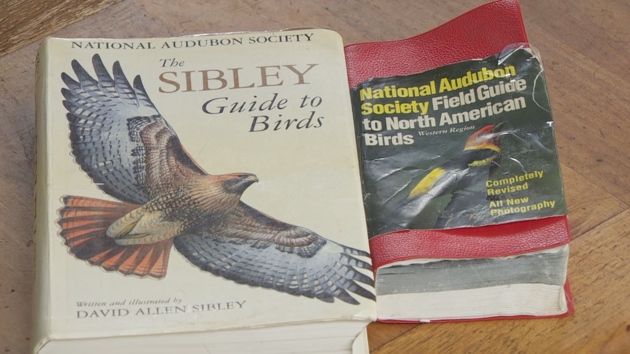 """There are a lot of good books out there, good resources out there to identify birds. There's field guides- all kinds of field guides,"" Liebzeit said. "" There's Sibley Field guide which is a really good one."" (KATU)"