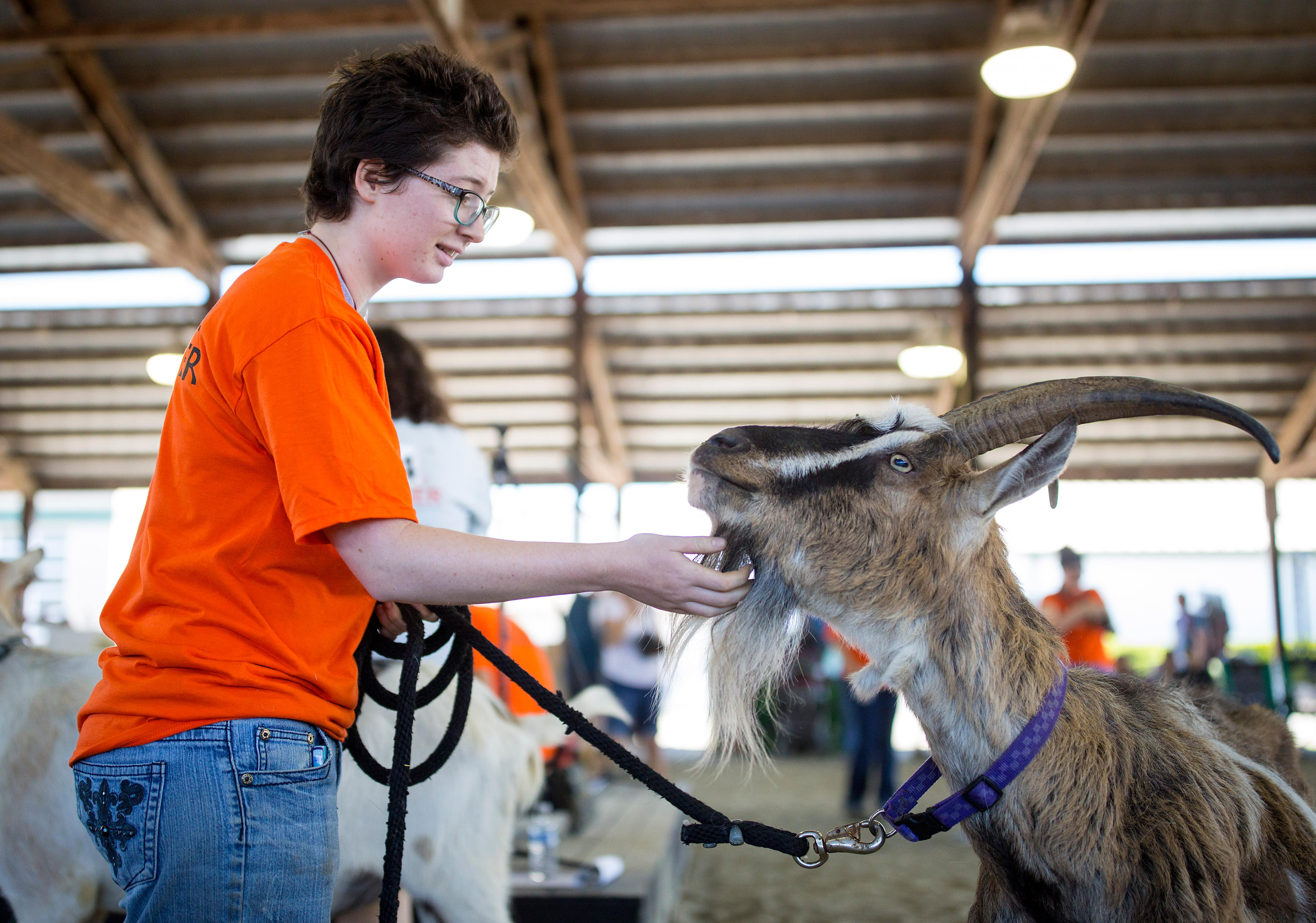 The annual Goat Olympics came to the Evergreen State Fairgrounds on Saturday in support of the New Moon Farm Goat Rescue and Sanctuary. Goats and their owners competed in events such as foot races, the shortest goat, the longest ears, and the best goat-owner-look-a-like. All proceeds from the event go to support New Moon Farm. (Sy Bean / Seattle Refined)