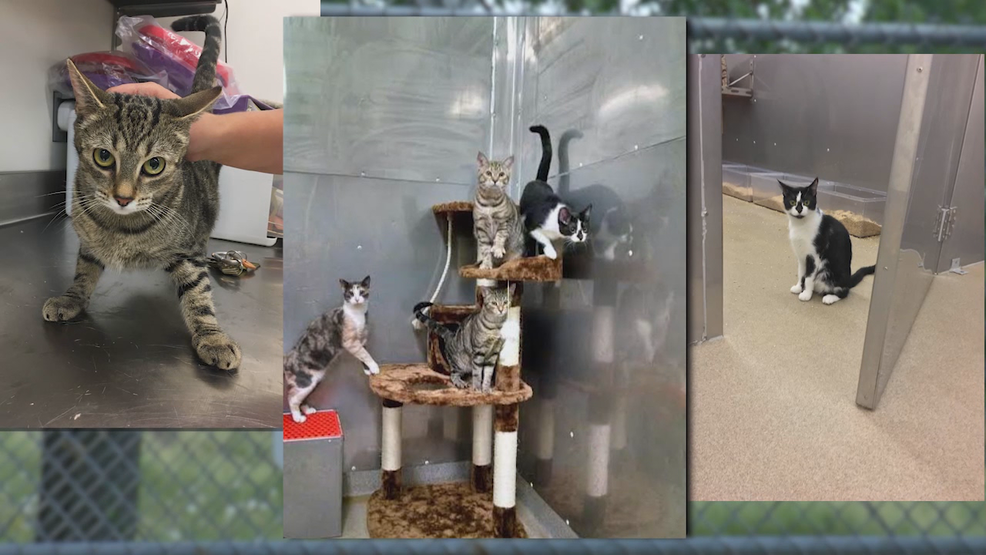 Usda records indicate nearly 3000 cats and kittens have been killed usda records indicate nearly 3000 cats and kittens have been killed at maryland lab wjla spiritdancerdesigns Images
