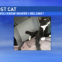 Central Illinois truck driver finds stowaway cat on trip to Iowa