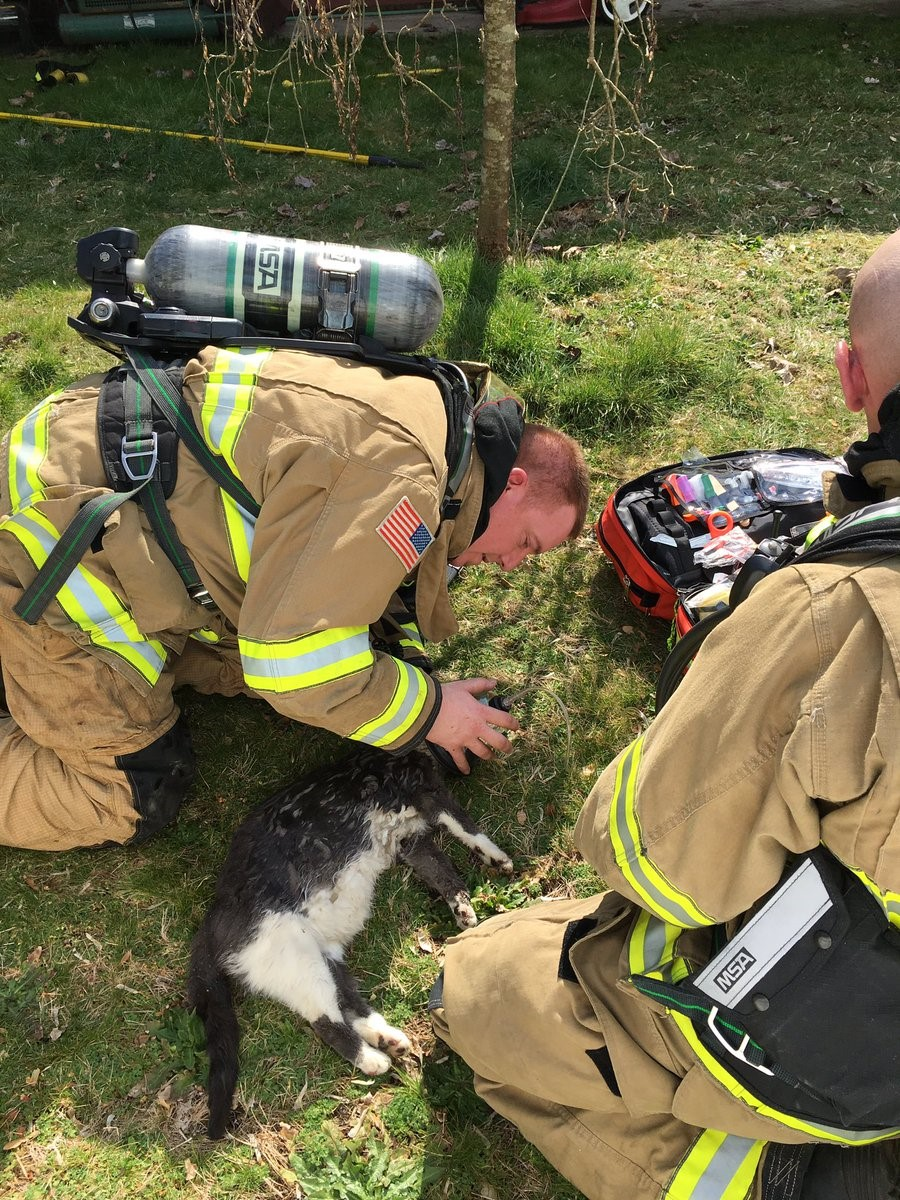 A cat is given oxygen after being rescued from a burning home in Carnation. (Eastside Fire Photo)