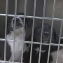 Shelter animals forced out of temporary location
