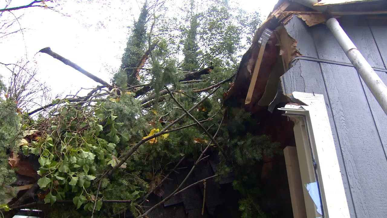 Damage after a tree fell through a Port Orchard home. (KOMO Photo)