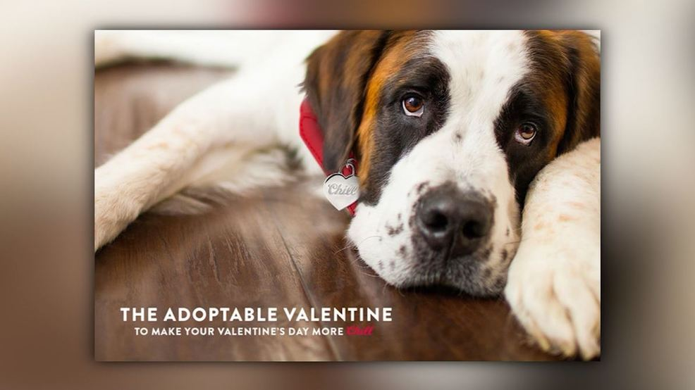 Coors Light adoptable dog - CNN.JPG
