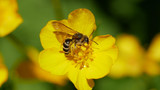 University of Oregon is now a bee-friendly campus