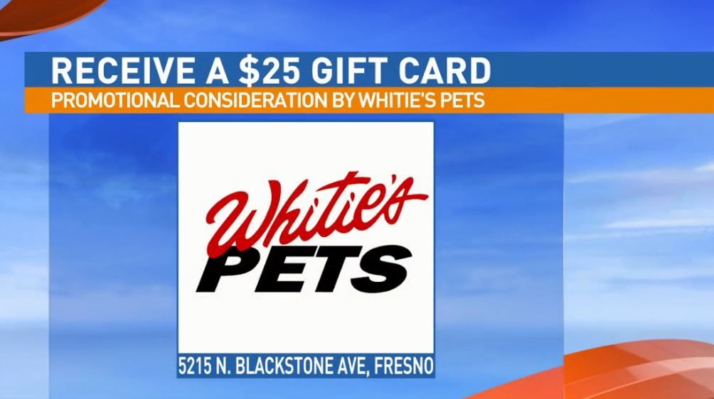 Get a $25 gift certificate to Whitie's{ }Pets for adopting Blake