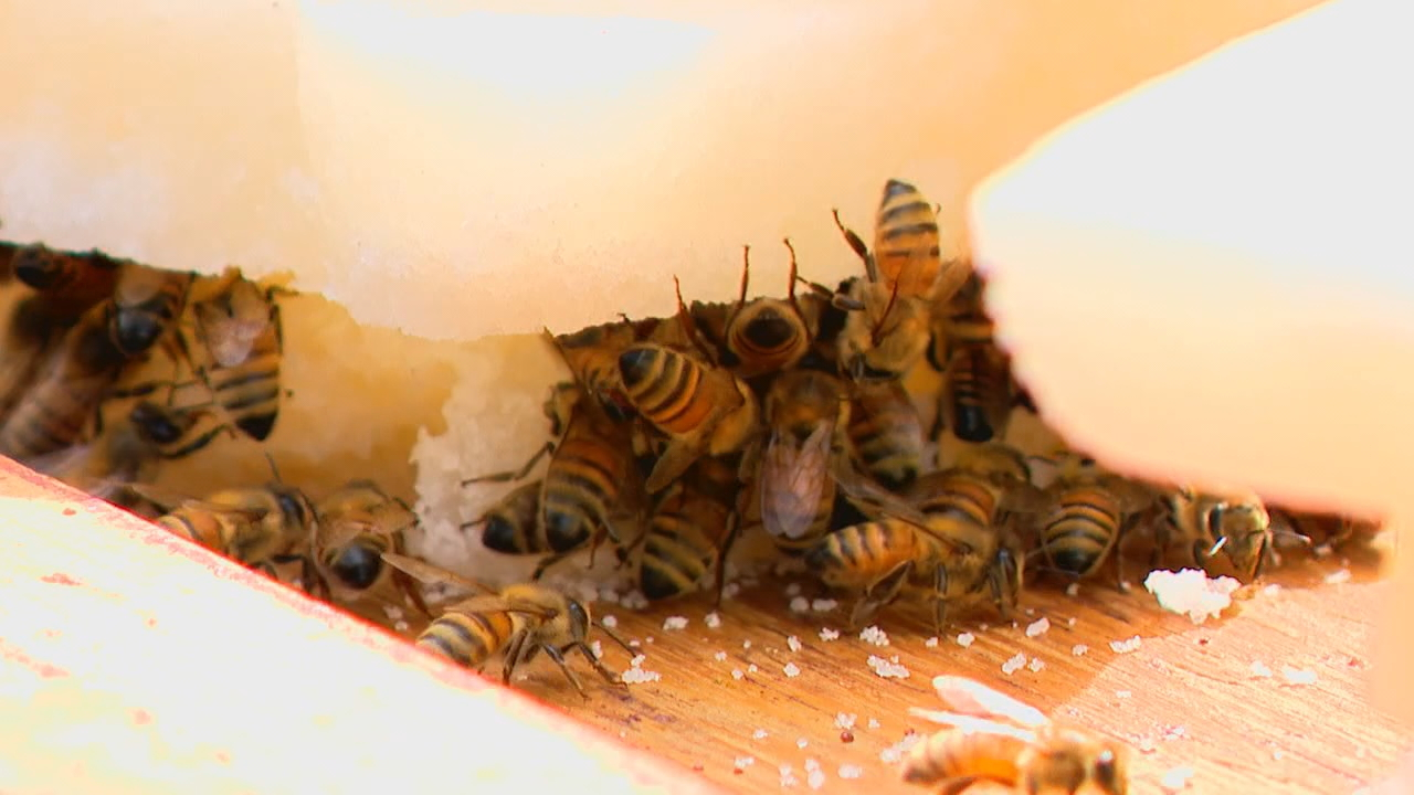 Seamus Lafferty, a third-year student at Buncombe County Early College, is a member of the school's beekeeping club, which was started three years ago to help keep the art alive. (Photo credit: WLOS staff)