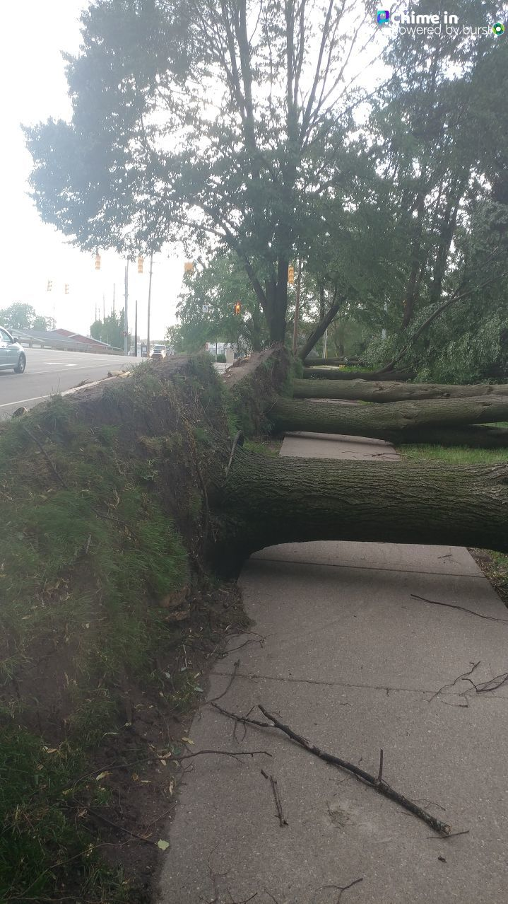 These trees along Hamblin and Washington streets in Battle Creek were layed flat by the storms that swept through the area June 11, 2020. (WWMT/Chime In, Margaret Burns)