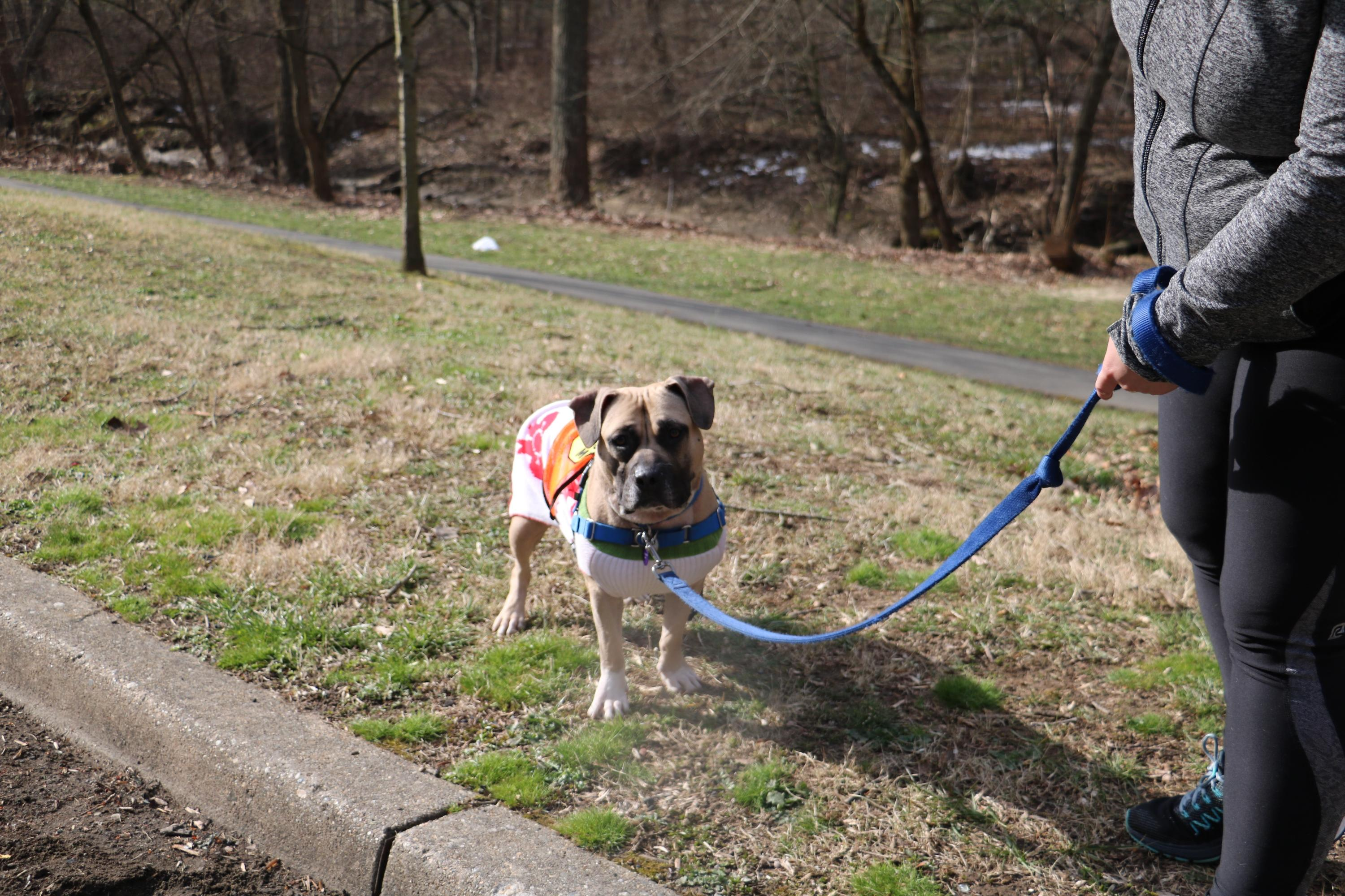 Tortellini loves to get out and walk, catch every scent available and discover new people. (Image: Courtesy HRA)