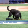 Finn, the 51s' Bat Dog, steals hearts and bases