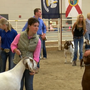 American Boer Goat Association brings National Goat show to Grand Island