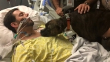 Devoted dog gives heartbreaking 'goodbye' to dying owner