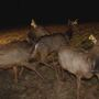 Gov. Justice requests aid in protecting elk herd in Logan County