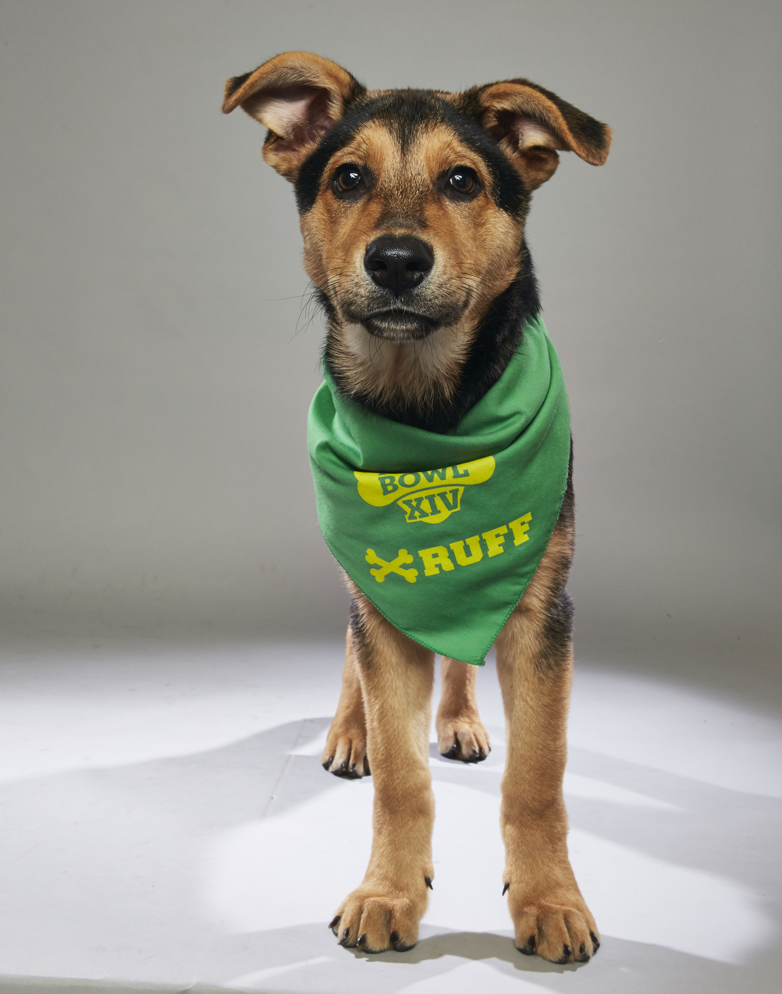 Edwin, a local San Antonio pup will be in Animal Planet's Puppy Bowl.
