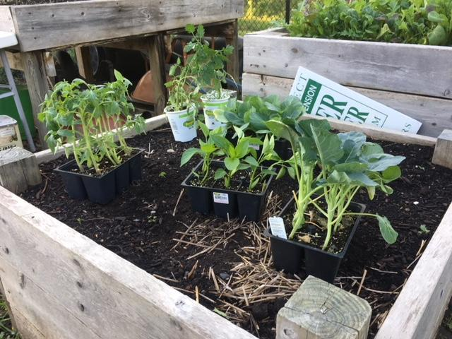 Edible Flint provides garden starter kits to residents in Genesee County.{&amp;nbsp;}(Photo: Courtney Wheaton) <p></p>