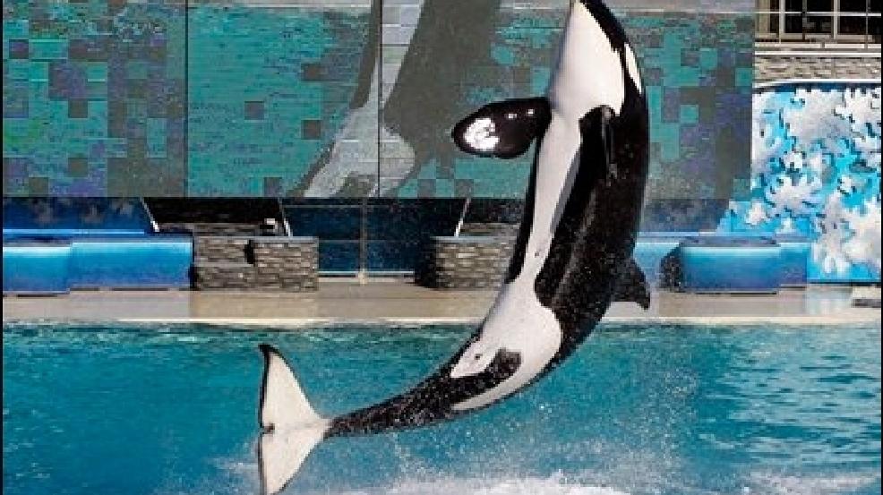 born free killer whales essay