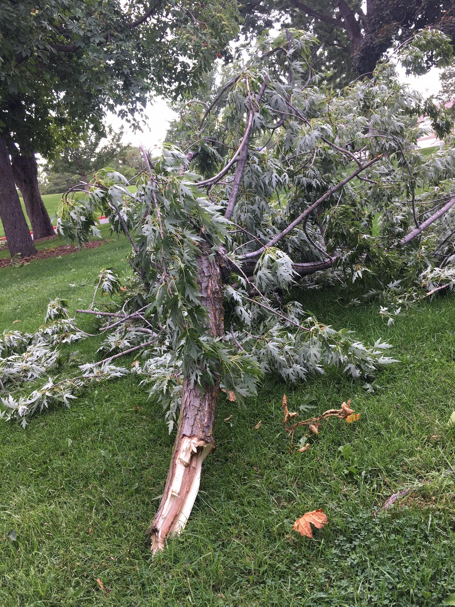 A severe thunderstorm that rolled through Wednesday afternoon knocked down trees and branches at the Boise Depot. KBOI Photos.