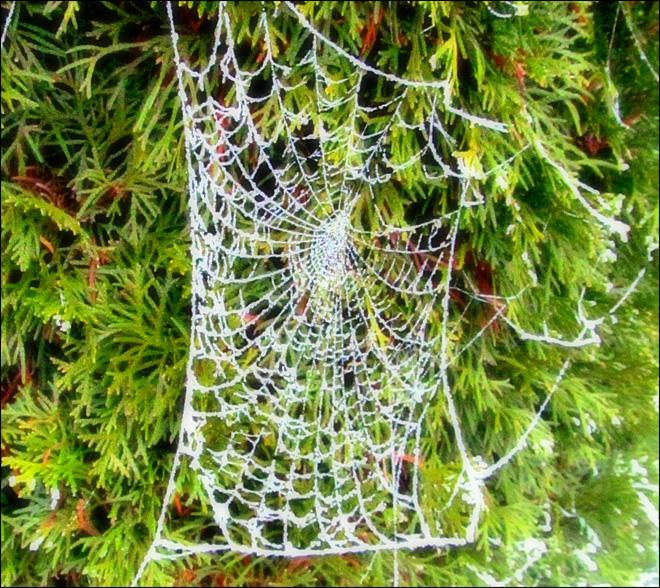 Frosty spider web in Silverdale. (YouNews contributor boggarts)