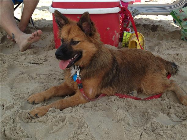 <a  href=&quot;http://share.valleycentral.com/Media/View/3528423&quot;>Beach Dog</a>