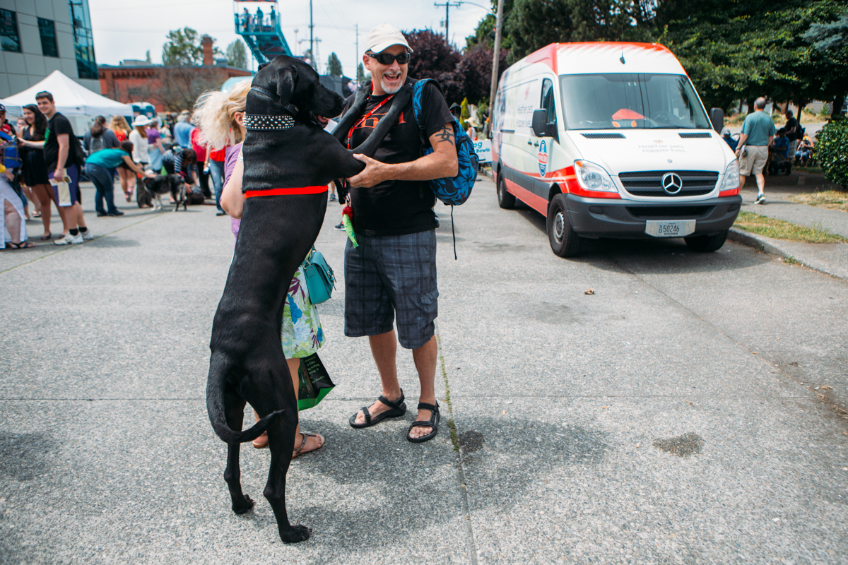 Sunday at the Fremont Fair features the Dog Parade, paralleling its human counter part, marched through the Fair Grounds featuring tons furry friends of all shapes and sizes. June 22nd 2014. (Joshua Lewis / Seattle Refined)