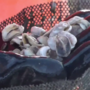 Shellfishing restrictions lifted in Rhode Island